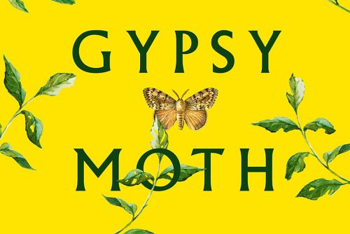 The Spirit Is Weak in 'The Gypsy Moth Summer'