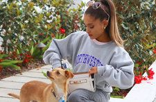 Who Is Your Favorite Pop Star Pet? Vote for Ariana Grande's Dog Toulouse, Taylor Swift's Cats & More