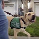 Disney+'s Pick of the Litter Will Follow 6 Dogs on the Path to Becoming Guide Dogs