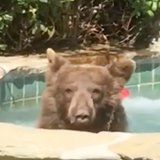 Let This Margarita-Drinking, Jacuzzi-Chilling Bear Inspire You to Live Your Best Summer Life