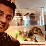 Sly Stallone Still Owns the 45-Year-Old Turtles From Rocky, and My Heart Is So Happy