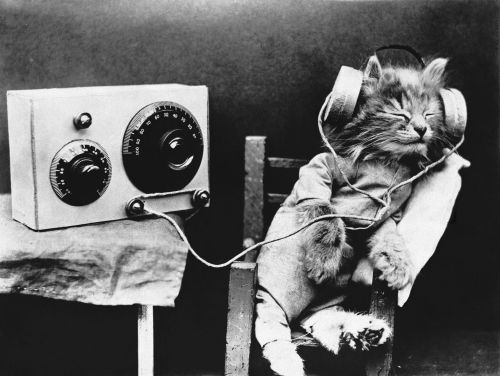 Spotify Unveils Playlists For Pets