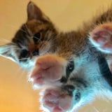 29 Photos of Kitties Sitting on Glass Tables That Will Make Your Day a Zillion Times Better